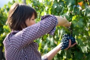 donne_agricole