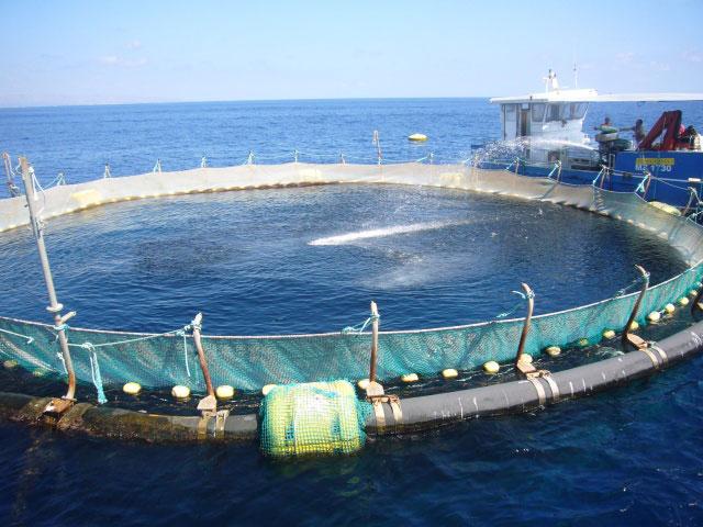 Lamezia oggi acquacoltura cosenza un progetto per la for Vasche per allevamento ittico