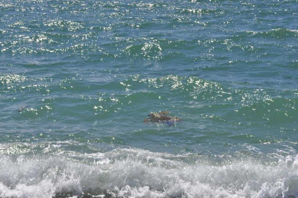 lamezia-mare