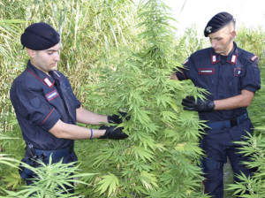piantagione-droga080816