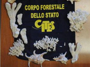 coralli-conchiglie