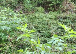 Droga: coltivava canapa indiana, un arresto nel Catanzarese