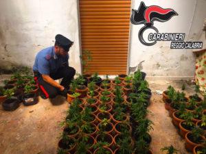 Droga: piantagione scoperta dai Carabinieri nel Reggino