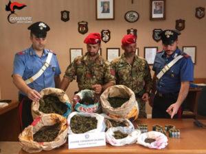 Droga:rinvenuti dai Carabinieri 9 kg di marijuana nella Locride