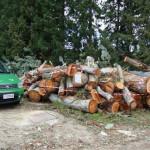 Tagliavano alberi in zona protetta parco Sila, denunciati