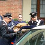 Rapina con calci e pugni sul corso di Vibo Valentia, due arresti