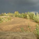 Droga: piantagione scoperta dalla Polizia a Rosarno