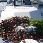 Pesca: Guardia Costiera Reggio sequestra 3.500 metri rete
