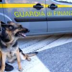 Droga: controlli Gdf, 3 arresti e 7 kg stupefacente sequestrati