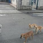Lamezia, consigliera D'Amico denuncia gesto di violenza contro i cani