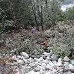 Furto di legname nel Parco del Pollino, due denunce