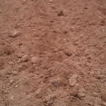 Agricoltura: Molinaro, lancia allarme cinghiali