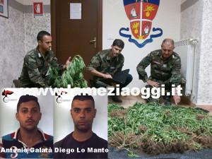 Droga: scoperta piantagione,  due arresti a Rosarno