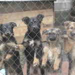 Randagismo: Comune Curinga offre contributo per adozione cani