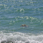 Lamezia: iniziativa III commissione consiliare contro inquinamento marino
