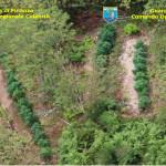Droga: 8 piantagioni sequestrate nella Locride e nel Vibonese
