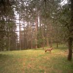 Ambiente: avviato monitoraggio fauna selvatica Parco Sila