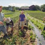Regione: erogati oltre 33 milioni agli agricoltori