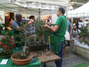 Cosenza: al Chiostro di S.Domenico III mostra nazionale di bonsai