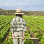 """Regione: Agricoltura; D'Acri, """"oltre 157 mln pagamenti Arcea"""""""