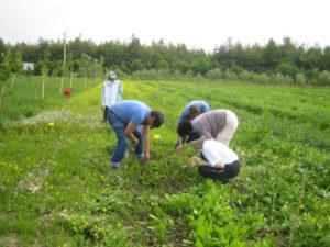 Regione: agricoltura biologica, pubblicati elenchi beneficiari