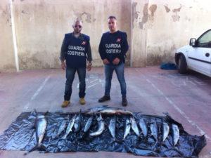 Pesca: Guardia Costiera Crotone sequestra 300 kg tonno