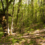 Boschi: tallini (FI), su forestazione non cali il silenzio