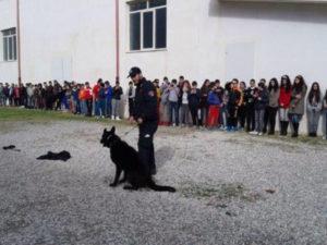 Carabinieri: studenti Ciro' Marina incontrano unita' cinofile