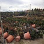 Maltempo: Cia agricoltura calabrese in ginocchio