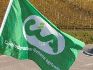 Maltempo: Calabria; Cia, agevolazioni sul credito per agricoltori