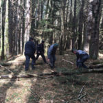 Disboscamento abusivo: 43enne denunciato nel Rossanese