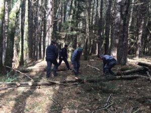 Furto legname, un arresto nel Reggino