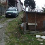 Cinghiali in due recinti, una denuncia a Guardia Piemontese