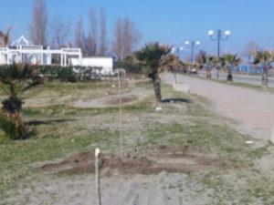Crosia: Restyling verde pubblico; nuovi alberi a centofontane