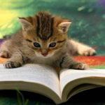 Lamezia: venerdì 17 febbraio la Giornata Nazionale del Gatto