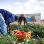 Migranti: Crotone, servizi anticaporalato in centri accoglienza