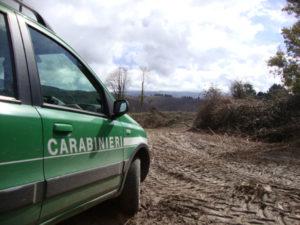 Taglio abusivo di legname, 4 denunce nel Vibonese
