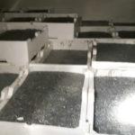 Pesca: sequestrati 55 kg di novellame nel Reggino