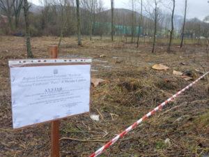 Taglio alberi nel parco del Pollino, due denunce