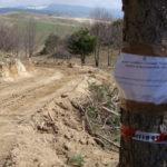 Ambiente: tre aree disboscate sequestrate a Spezzano della Sila