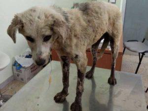 Violenza su animali: cagnetta soccorsa nel Cosentino