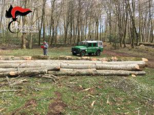 Ambiente: 689 piante tagliate nel Parco dell'Aspromonte,6 denunce