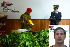 Droga: scoperta piantagione di cannabis nel Reggino, un arresto