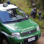 Foreste Calabria: Coldiretti con testo unico importanti prospettive