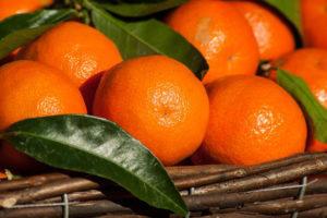 Agricoltura: Cia Calabria incontra ricercatori Crea