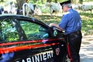Pascolo abusivo: controlli Carabinieri  Maierato e Angitola