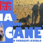 Lamezia: domenica al Parco Impastato giornata cinofila