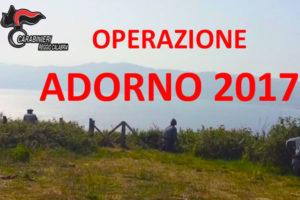 Bracconaggio, al via Operazione Adorno su due versanti Stretto Messina