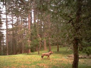 Parco Sila: si consolida tutela e conservazione Biodiversità