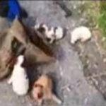 Trovati all'interno del Parco Aspromonte sei cuccioli abbandonati